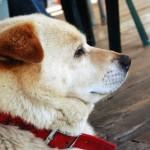 犬のおやつで無添加のものはありますか?
