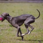トウモロコシや小麦は犬の健康にどう影響しますか?