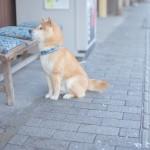 犬が吐くのは何のシグナル?