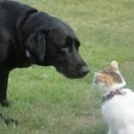 シニア犬(老犬)へのおすすめ