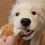 消化器疾患の愛犬におすすめなのはどんなフード?
